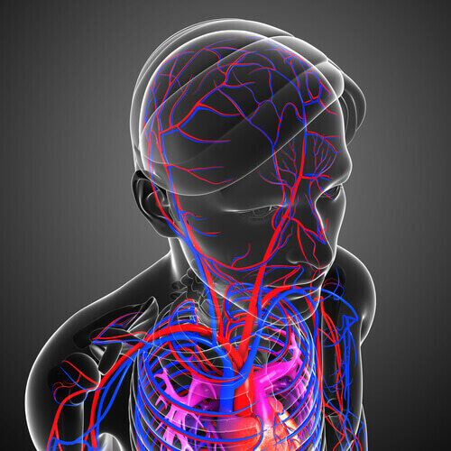 The brain's circulatory system that brings blood flow to the scalp