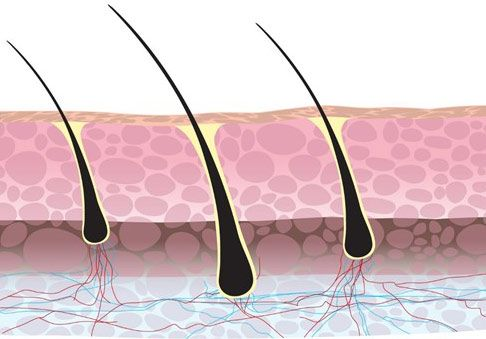 Hair follicles can be affected by vitamin D