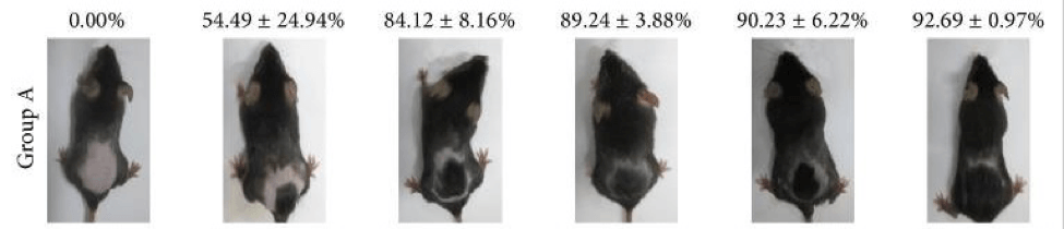 Group A of mice weeks 1-6 hair growth