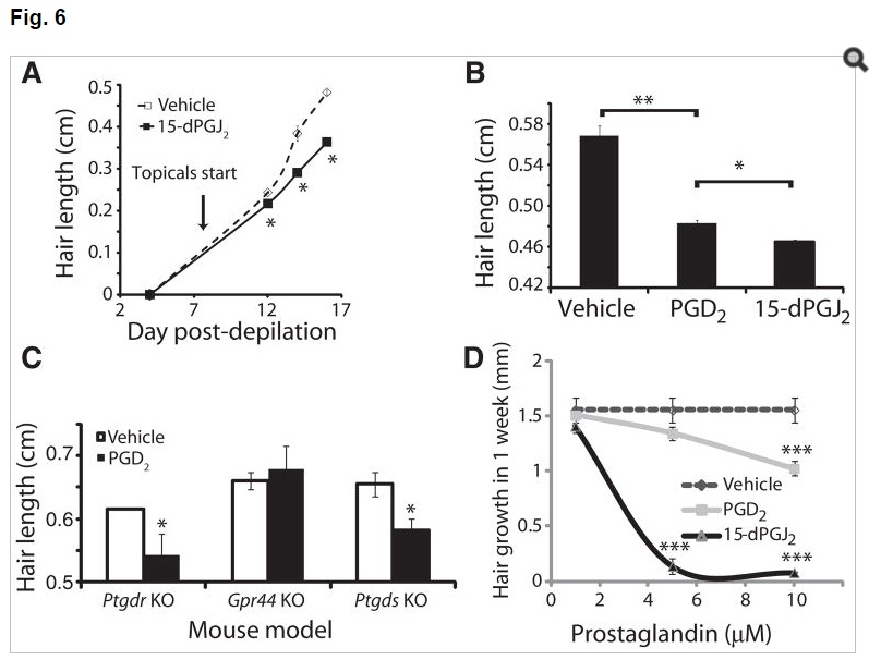 PGD2 levels effect on hair growth in mice