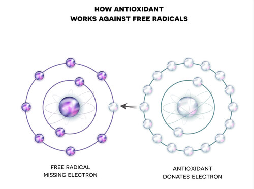 An antioxidant donating an electron to a free radical