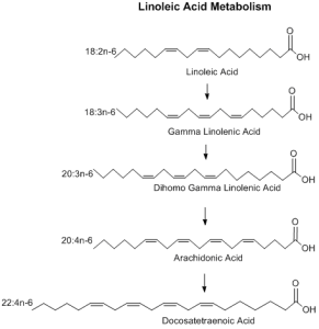 Linoleic Acid Metabolism