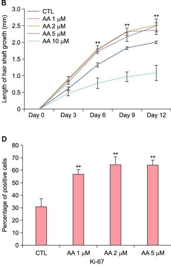 growth seen in human hair follicle arachidonic acid