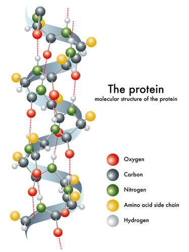 The structure of keratin