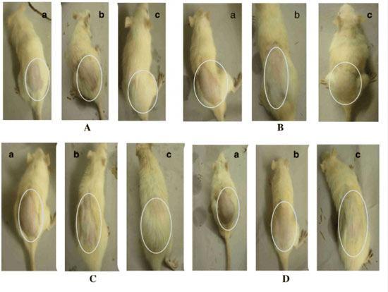Mice experiment using polysorbate