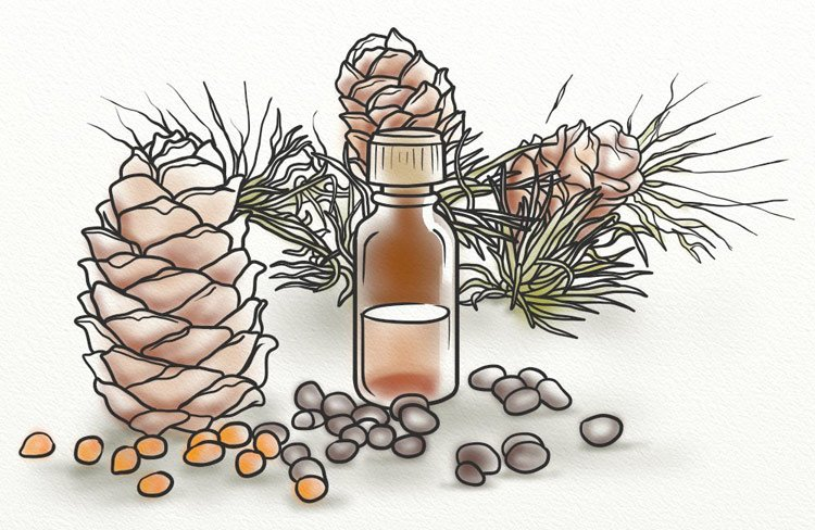 The Truth About Using Cedar Wood Oil For Hair Loss