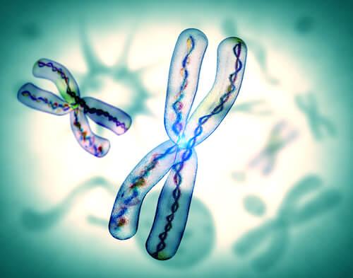 The X chromosome