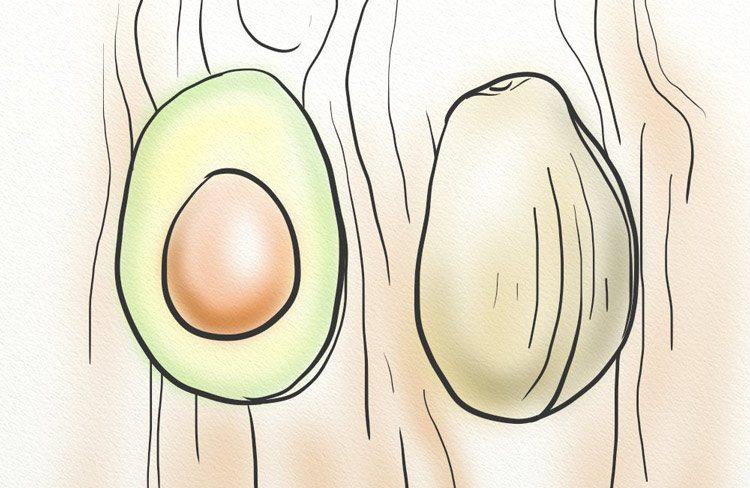 Avocado contains beta sitosterols