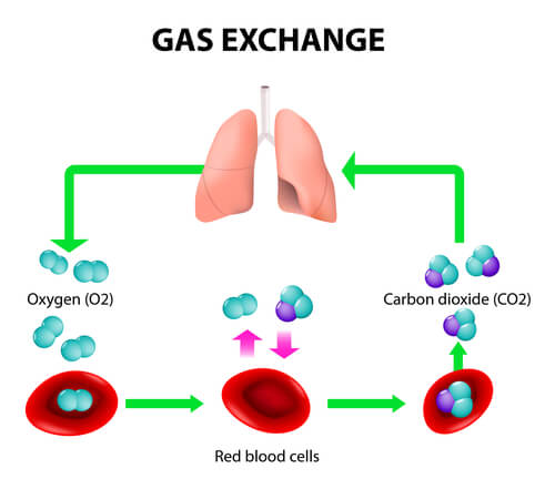 A diagram showing oxygen transport