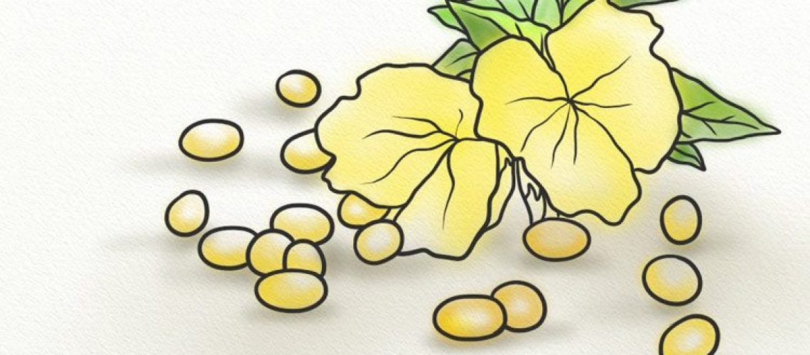 Capsules of evening primrose oil with the flower
